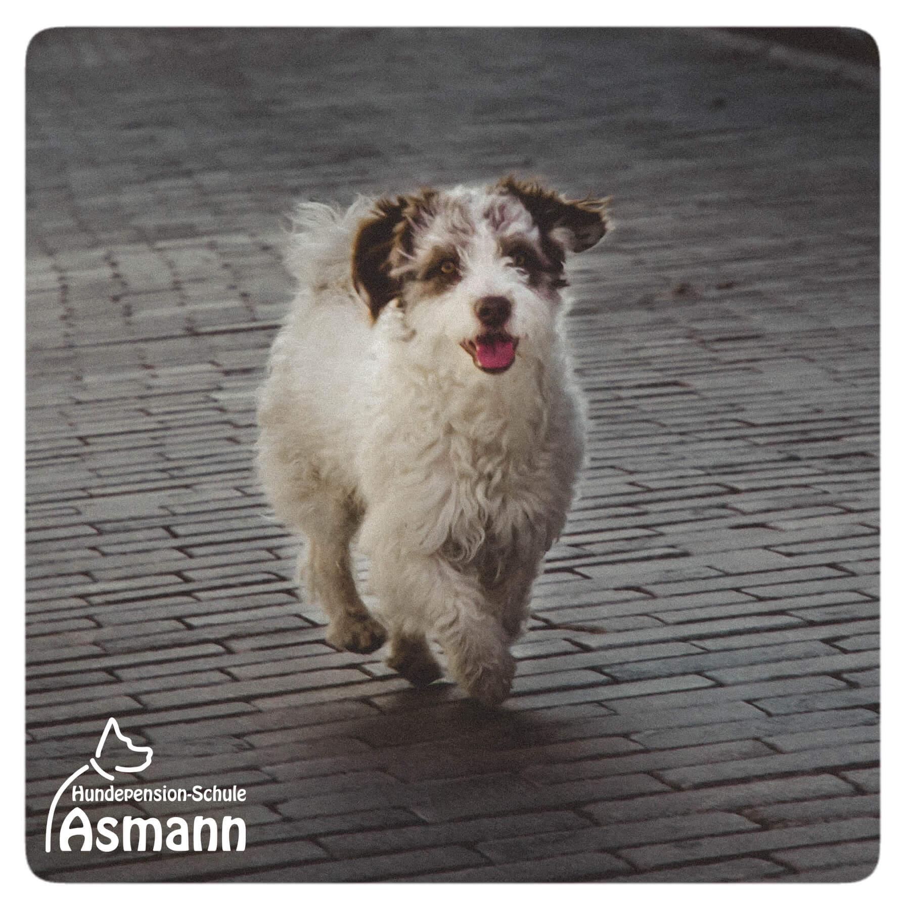 Hundepension Asmann Hunde weltweit