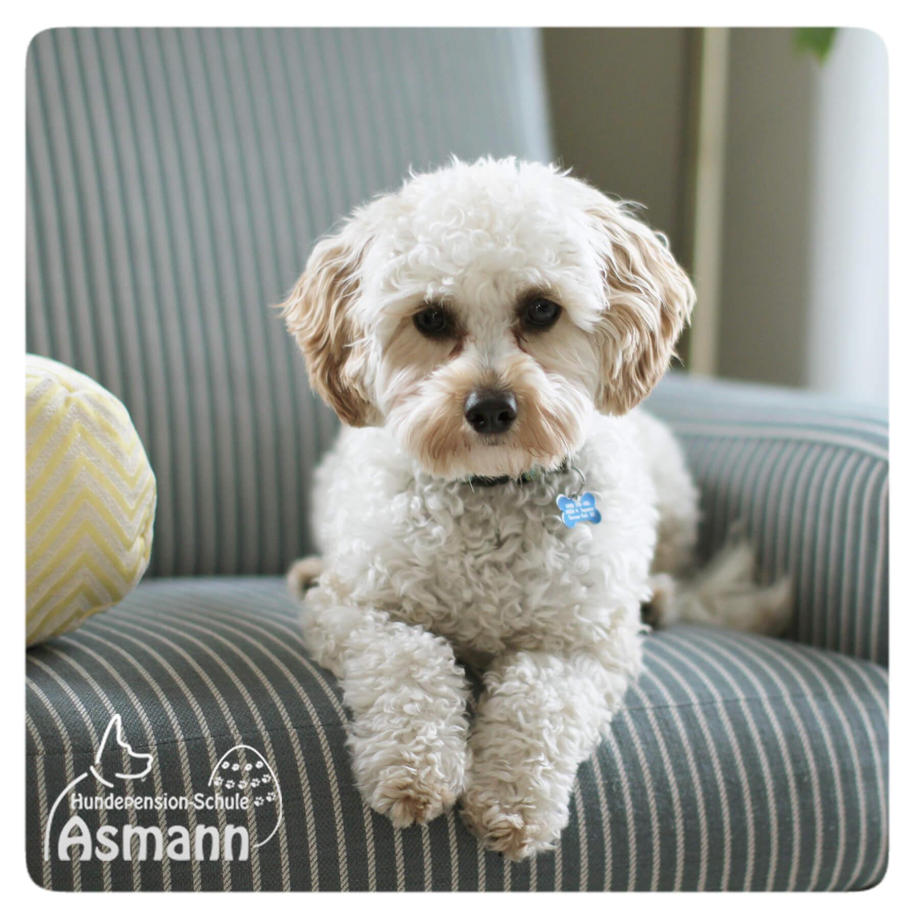 Hundepension Asmann