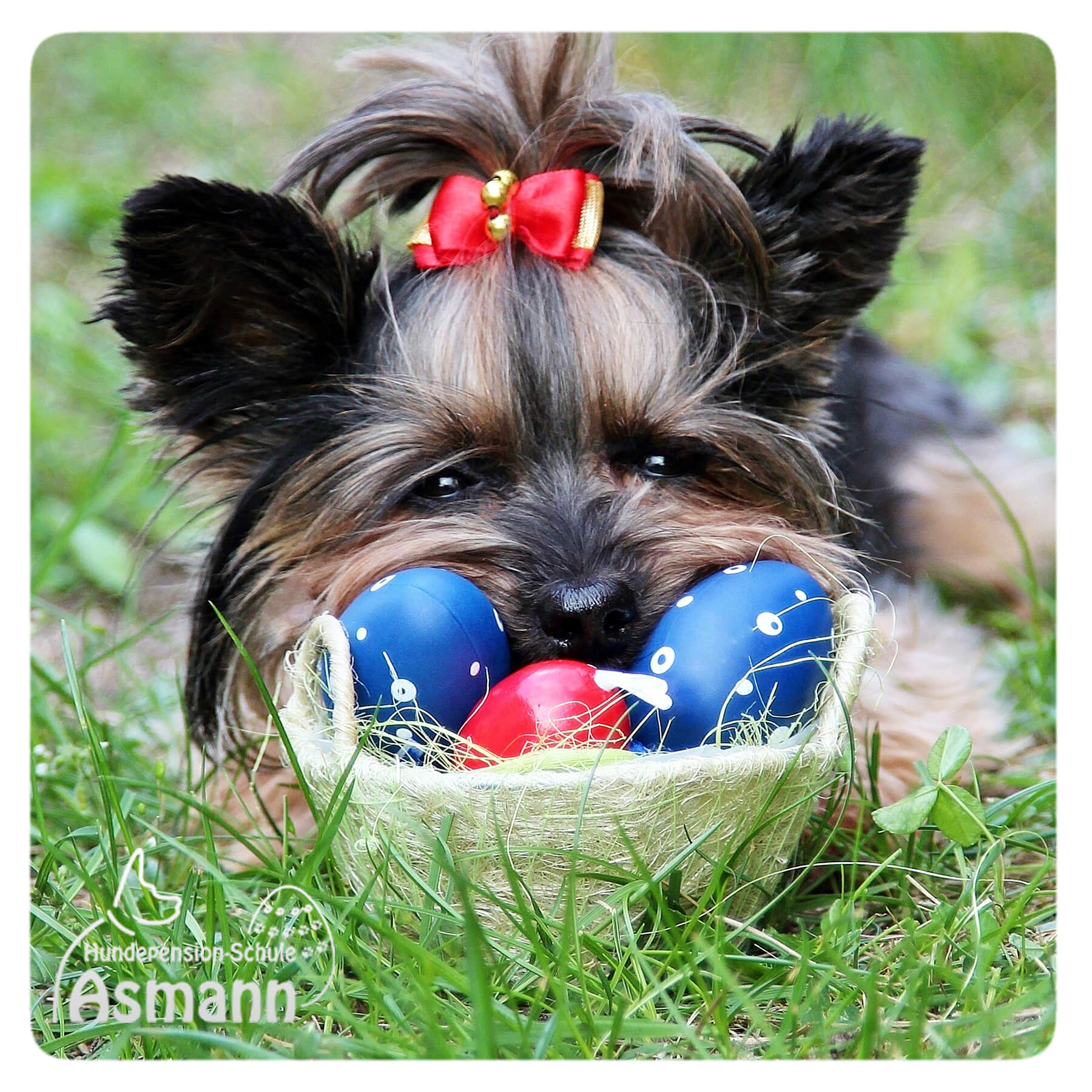 Frohe Ostern wünscht die Hundepension Asmann