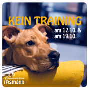 Kein Training